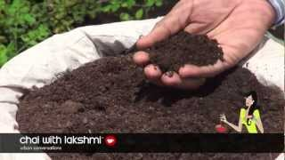 How To Grow Organic Vegetables On Your Roof Top