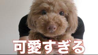 高城亜樹さん➡︎https://www.youtube.com/watch?v=vPwjdNzdWHA サブちゃ...