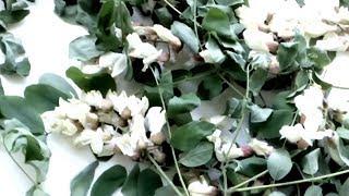 видео Растения - Портал о скорой помощи и медицине
