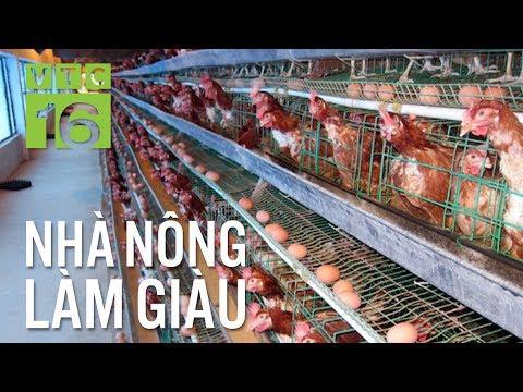 Thiết kế chuồng đẻ trứng cho gà   VTC16