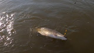 Рыбалка в Августе 2021 на Волге