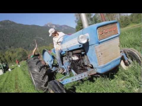 Helmer's Organic Farm - Carrot Harvest