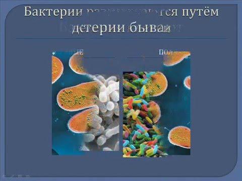 Бактерии. Презентация для младших классов.