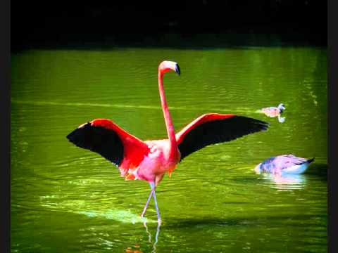 Bruce Springsteen - Pretty Flamingo (best version)