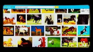 Где можно быстро скачать картинки про лошадей!