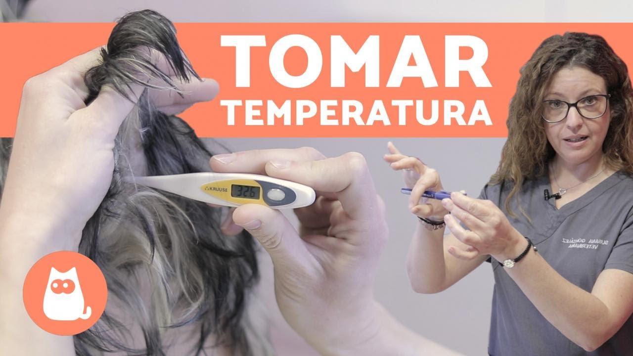 ¿Pueden los parásitos causar baja temperatura corporal?