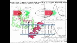 Site-Specific Spectroscopic Reporters of the Local Electric Field...