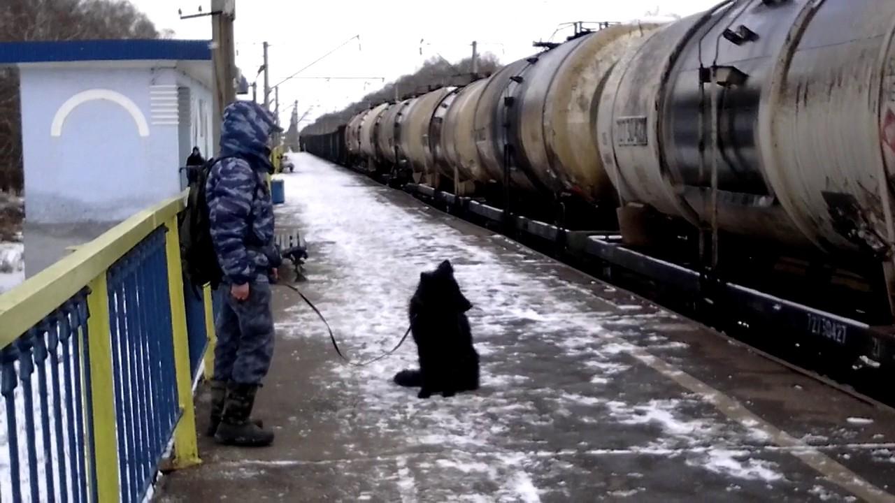Рей 7 мес. Вдержка в условиях шума поезда.
