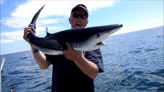 Pêche aux requins Peau Bleue  Bretagne sud 9/7/2016