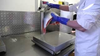 Direct Seafoods: Difference Between Gross and Net Weight
