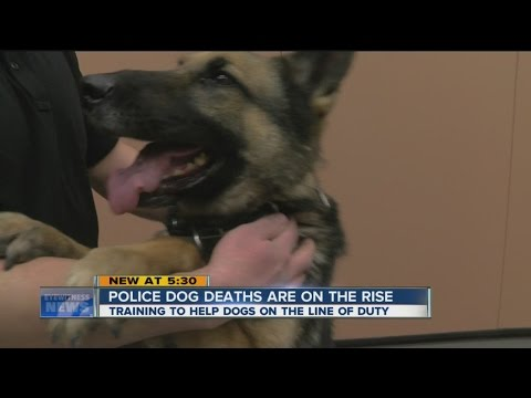 NY medics train to treat K-9s
