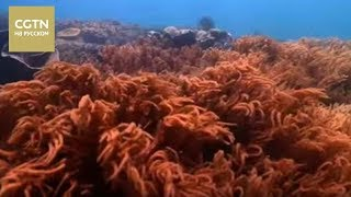 видео Дары природы