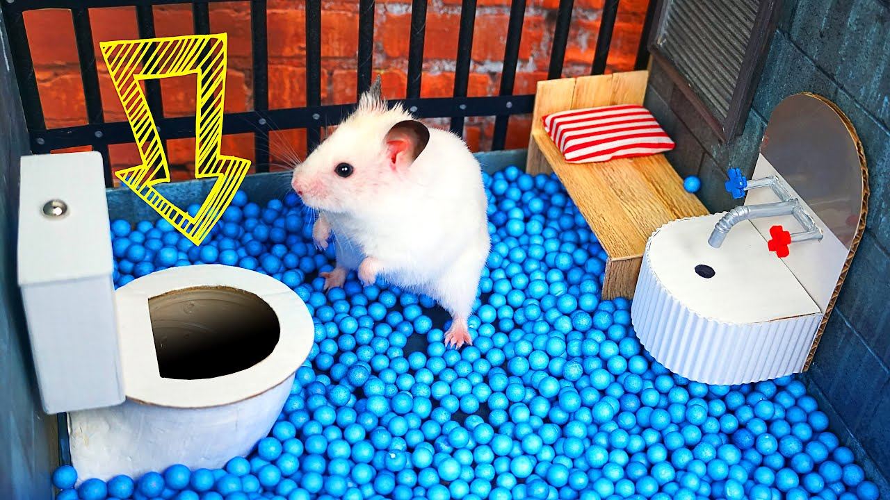 🐹 Hamster Escapes the  Creative Maze for Pets in real life 🐹 in Hamster Stories