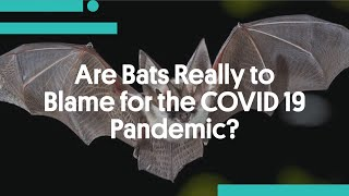 Are Bats Really to Blame for the COVID 19 Pandemic