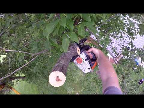 Cutting tree bits in the Boom lift 55' high