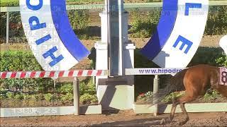 Vidéo de la course PMU PREMIO NEOZELANDES HANDICAP