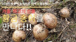 인제 송이버섯,능이버섯