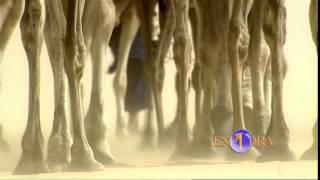 El Largo viaje de los Tuareg