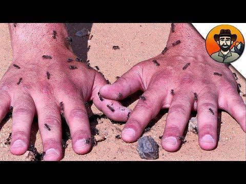 Вопрос: Какие муравьи кусаются больнее – черные или рыжие?