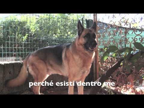 Jago grande cane dal grande cuore youtube - Il divo esisti dentro me ...