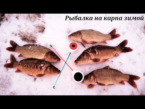 Рыбалка на карпа зимой. Платный водоем. Карп со льда.