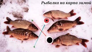 Рыбалка на карпа зимой Платный водоем Карп со льда