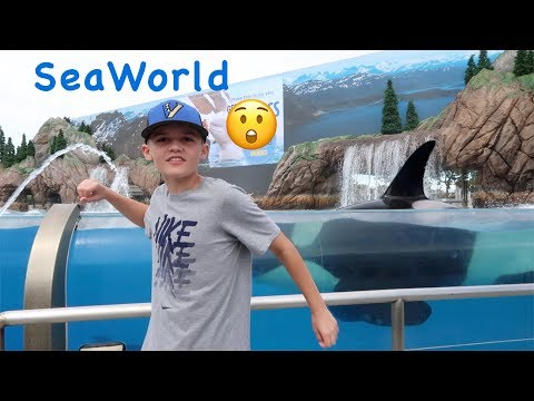 Animal Steals Churro at SeaWorld