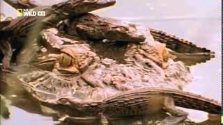 Документальный фильм   Самые опасные животные  Морские глубины  HD 2009