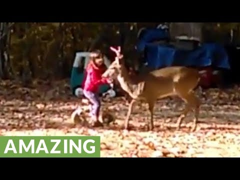 Super friendly wild deer lets kids pet him
