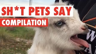 Sh*t Pets Say Video Compilation 2016