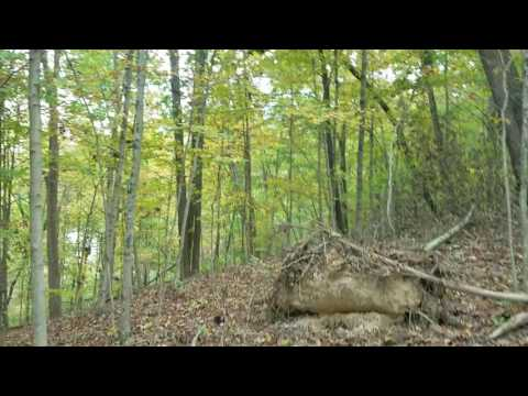 10 acres of land for sale in Athens County Ohio. Huge Trees, Timber, Creek, & Rock outcroppings