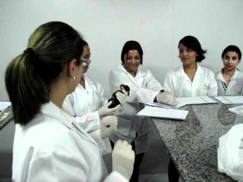 CETAC - Curso de Auxiliar Veterinário de YouTube · Duração:  2 minutos 18 segundos