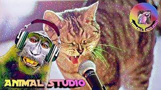 Приколы про животных,Видео приколы ,танцующих животных,приколы 2019