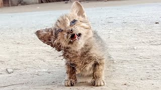 Rescue Of Abandoned Blind Baby Kitten On Roadside That Was Close To Death  Cries For Help