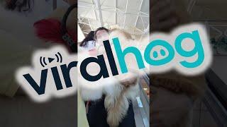 Big Puppy is Scared of Escalators || ViralHog thumbnail