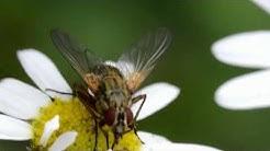Hyönteisiä Lähikuvassa