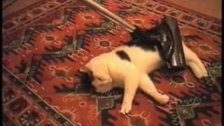 Кот любит пылесос