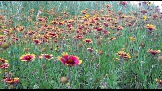Country Living | Short Film