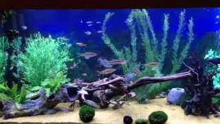 5ft Fish Tank With Custom Made Latest Led's