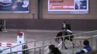 Продается спортивная лошадь кличка Довгар