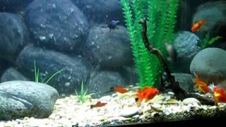 Угловой аквариум 160 л.(Панорамное стекло 109 см., 2012-01-24T19:38:57.000Z)