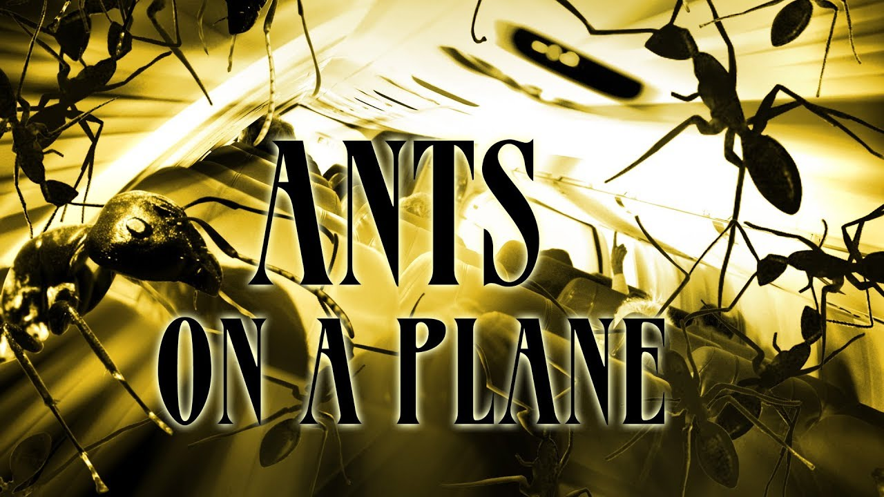 Download Ants on a Plane - Full Movie