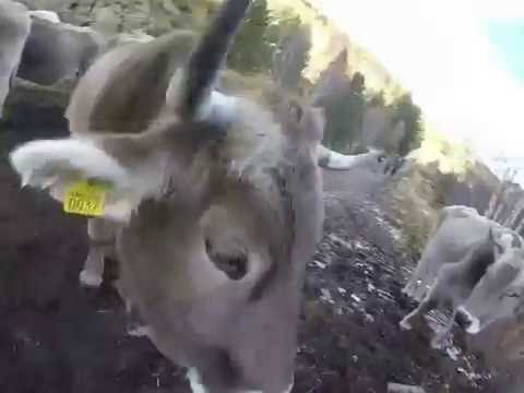 Andorra Mystery Trip