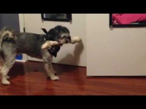 The Dog, The Bone & The Doorway Hilarious Confrontation