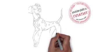 101 далматинец смотреть онлайн  Как поэтапно нарисовать далматинца щенка