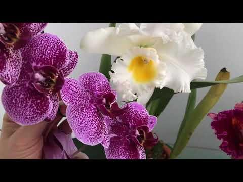 Разные размеры цветов у разных моих орхидей, наглядно
