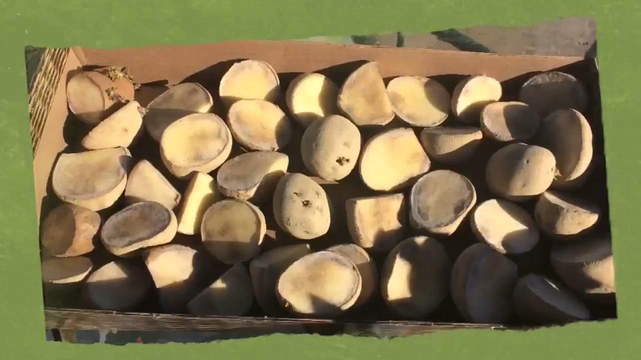 Growing Potatoes in Raised Beds- Piedmont Farm & Garden - YouTube
