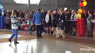 В выставке регионального ранга «Рождественские встречи» собаки получали титулы