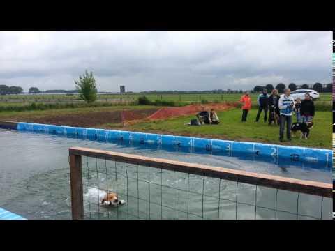 Dock Diving; Extreme Vertical Tobi