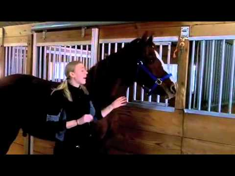 What Breed? Choosing The Right Horse